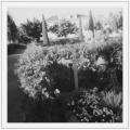 Cmentarz Pully, pani Goldberg na grobie Stanisława Vincenza, październik